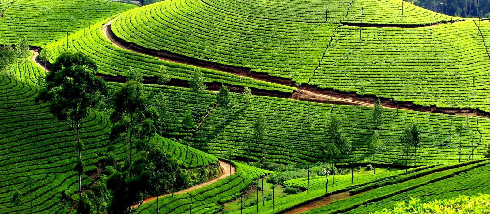 Romantic Ooty with Kodaikanal